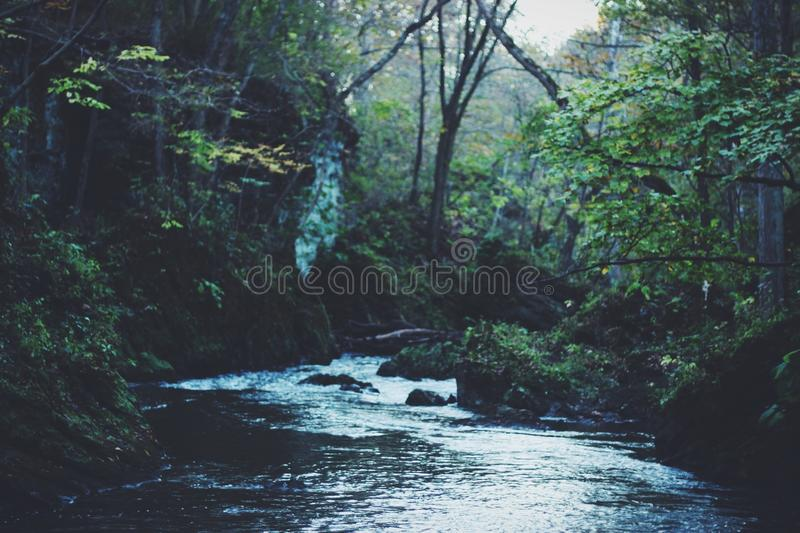 River Running Through Dense Forest Free Public Domain Cc0 Image