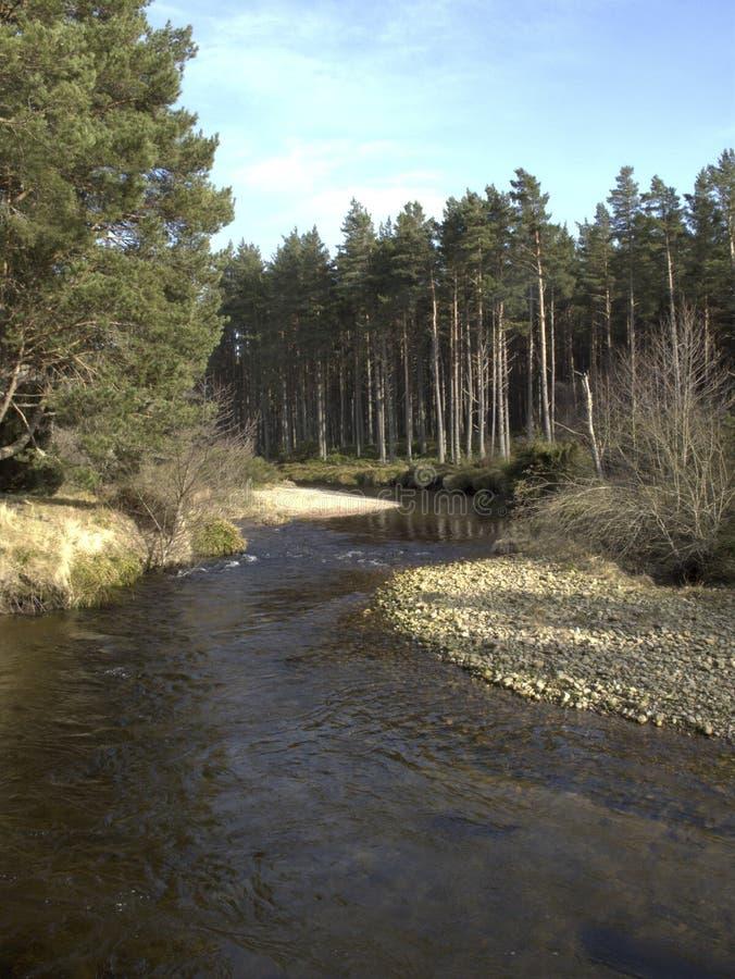 River Running Into Loch Morlich, Avimore Royalty Free Stock Photo