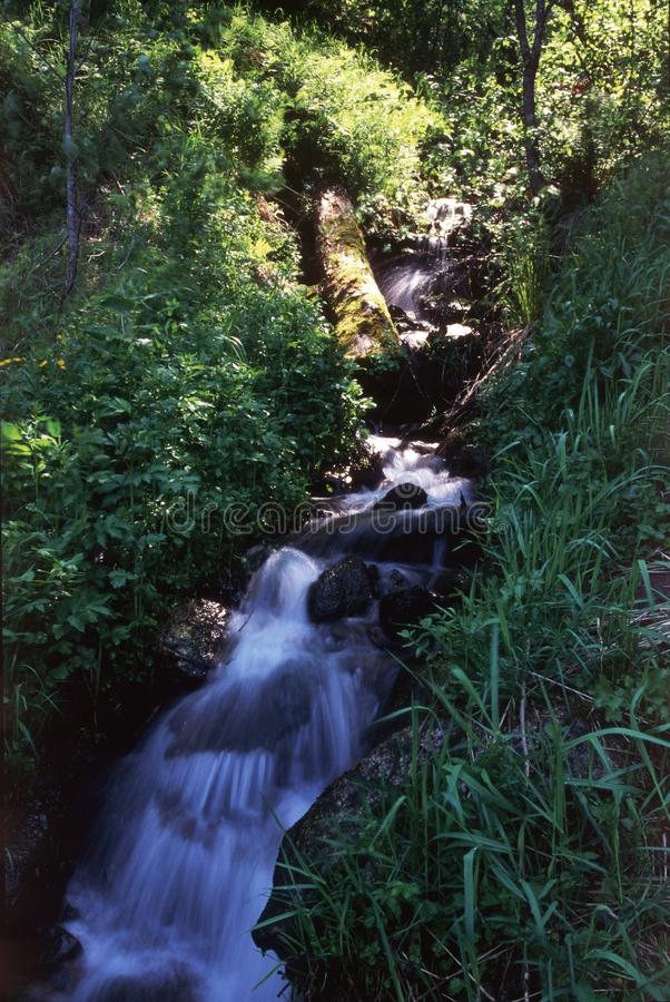 Forest ravine royalty free stock photography