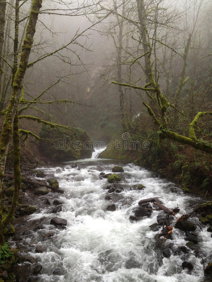 River running through the mist in Portland, Oregon royalty free stock photography