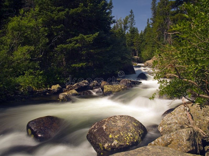 River Rushing Down a Dark Green Mountain. River rushing through the forest of the Wild Basin area in Rocky Mountain National Park royalty free stock image