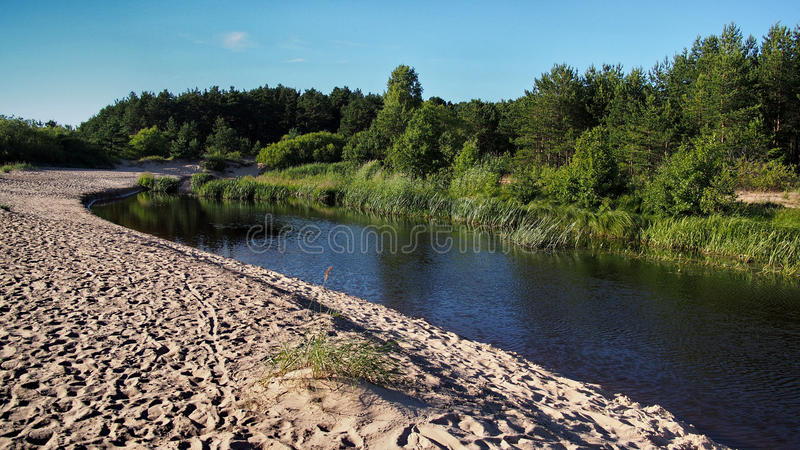 River sand coast green forest stock photo