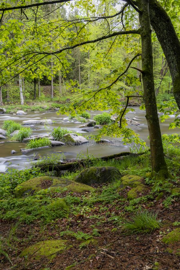 River Sazava near Smrcna, Czech Republic. Nature, water, forest, landscape, green, natural, tree, travel, stream, background, outdoor, view, scenery, stone royalty free stock photography
