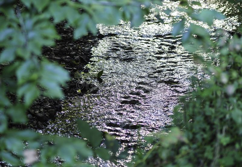 Flowing River Through Framed Leaves royalty free stock photos