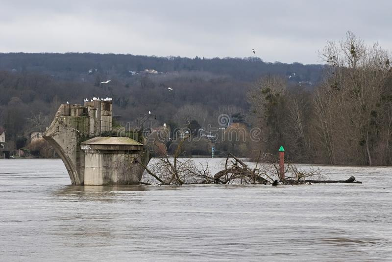 2018 river Seine flooding in Poissy, France. Old Bridge pier of Poissy, in the 2018 exceptional winter flooding, bringing huge branches in its flow stock images