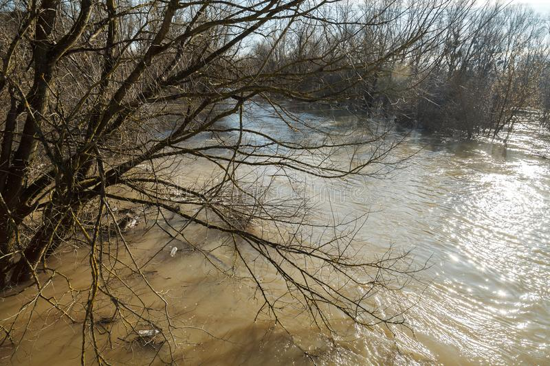 The river after the showers came out of the shores. The river after the downpours came out of the banks. Flooding of river bank, trees after flood royalty free stock images