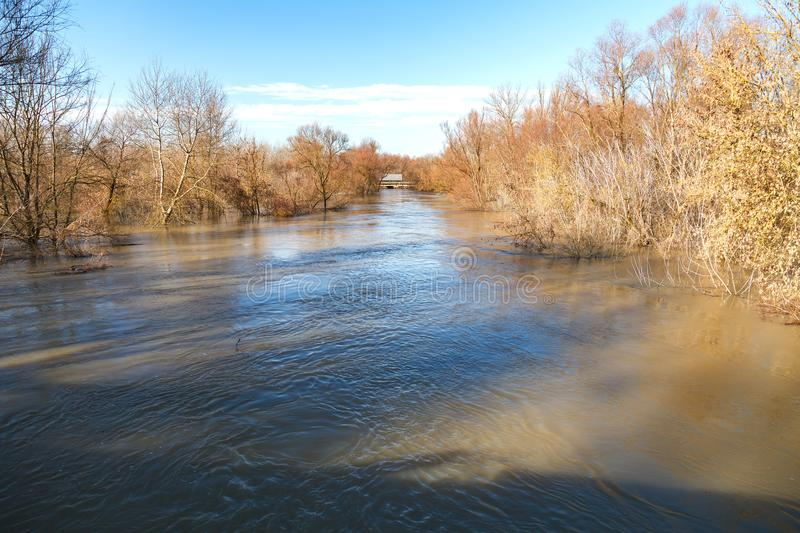 The river after the showers came out of the shores. The river after the downpours came out of the banks. Flooding of river bank, trees after flood stock photo
