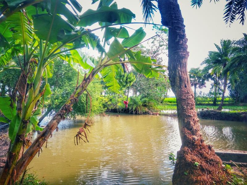 River side. This is a river side picture with two type of tree royalty free stock photo