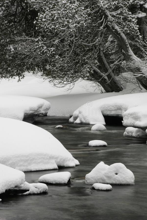River Beside Snow Coated Tree Free Public Domain Cc0 Image
