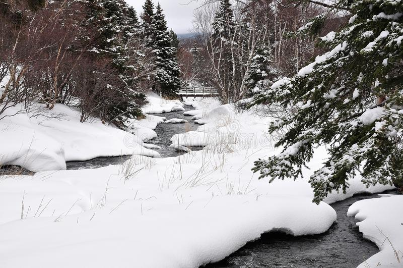 River in snowy forest