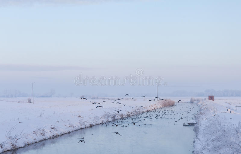 Download River In A Snowy Landscape With Flying Birds Stock Photo - Image: 83709030