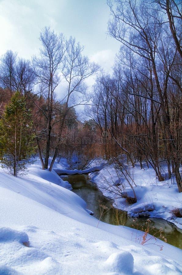 River spring stock image