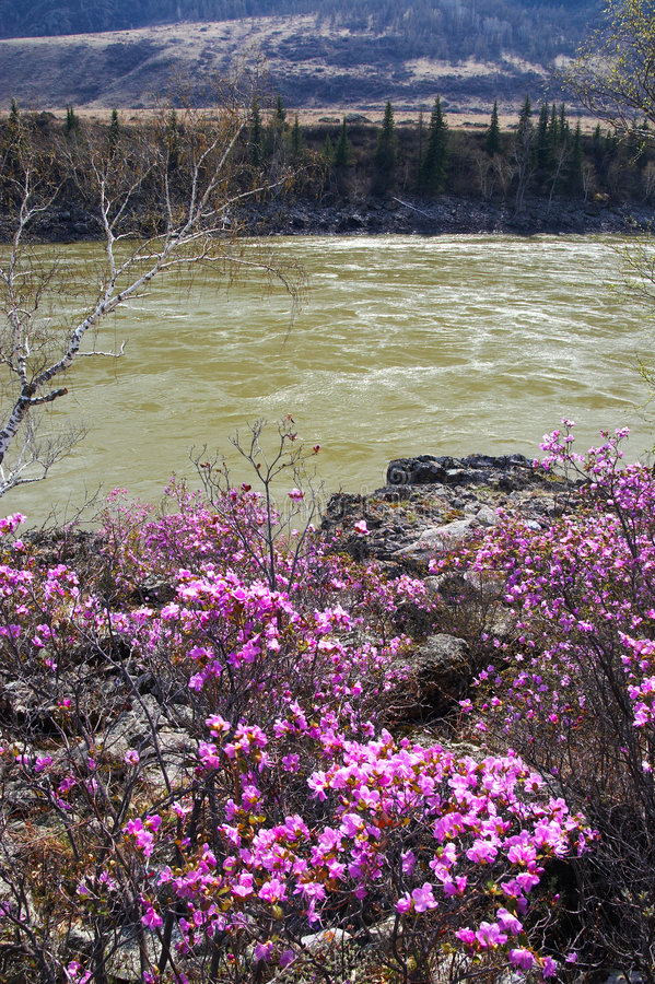 River and spring's flower. royalty free stock photos