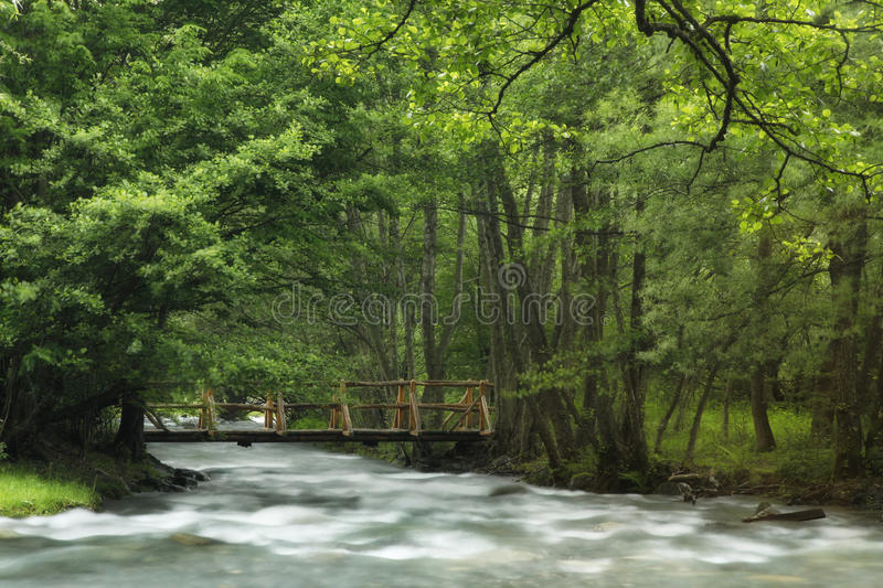 Download River in spring stock photo. Image of forest, cascade - 38448586