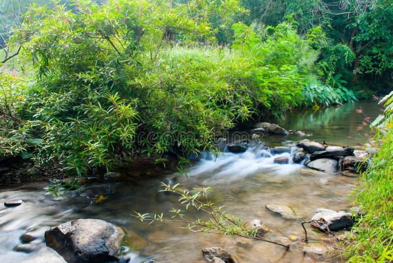 The River in the Sri Sat Cha Na Lai national park landscape, Sukhothai, Thailand. Forest river flow landscape stock image