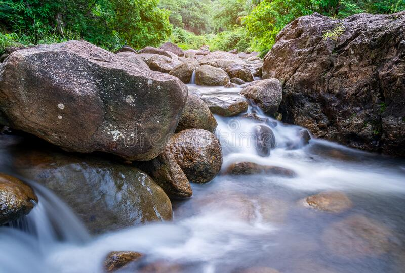 River stone and green tree, Stone river and tree leaf in forest stock photo