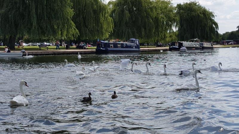 River Stratford upon Avon Shakespeare royalty free stock photo