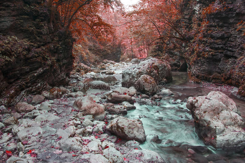 River stream in colorful autumn forest in Slovenia stock images