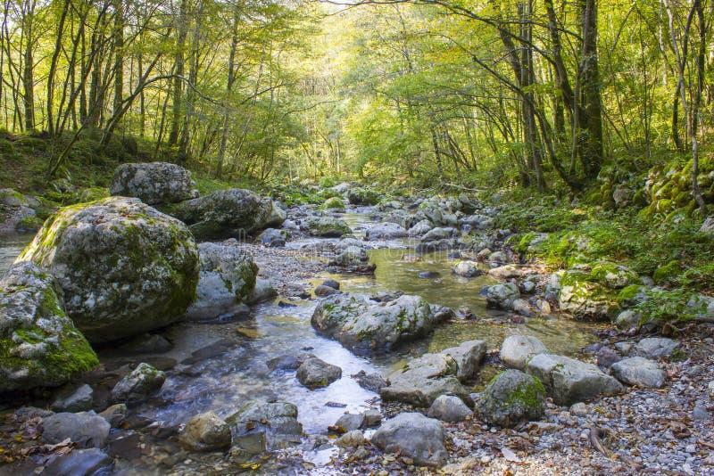 River stream in colorful autumn forest in Slovenia stock photo