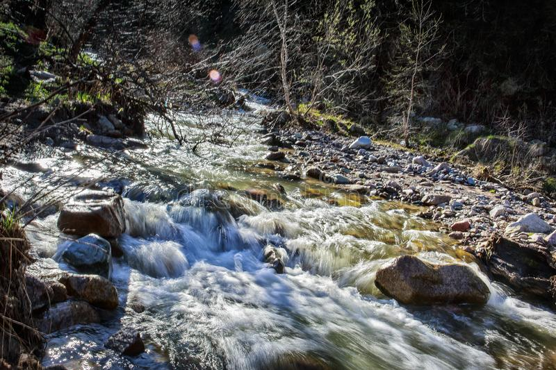 Spring waters. River stream in the mountains in spring stock image
