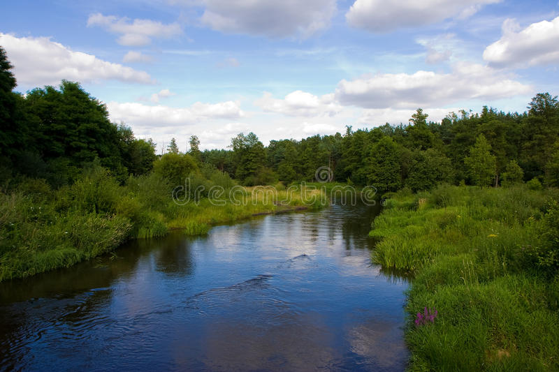 River surrounded with greenery on a summer day royalty free stock image