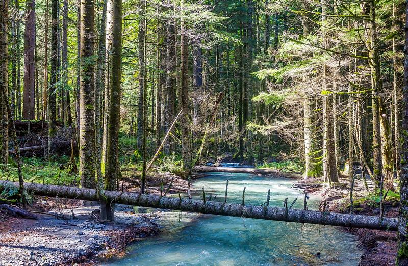 River in the taiga. Wild nature. Summer. Far East, Sakhalin Island, Russia. royalty free stock photo