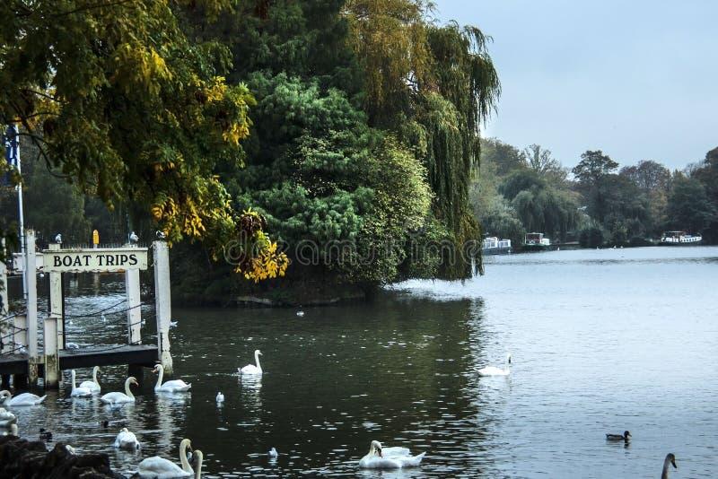 River Thames. Windsor, Berkshire, England, UK. River Thames in town Windsor, Berkshire, England, UK stock images