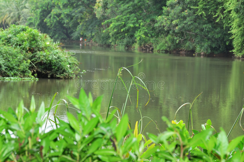 River and Trees. Trees near by a beautiful river in Kerala, India royalty free stock photography