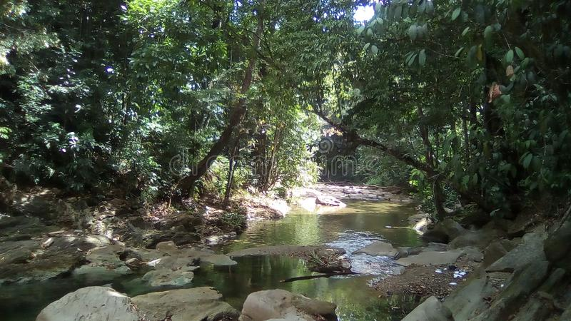 River in Trinidad and Tobago royalty free stock images
