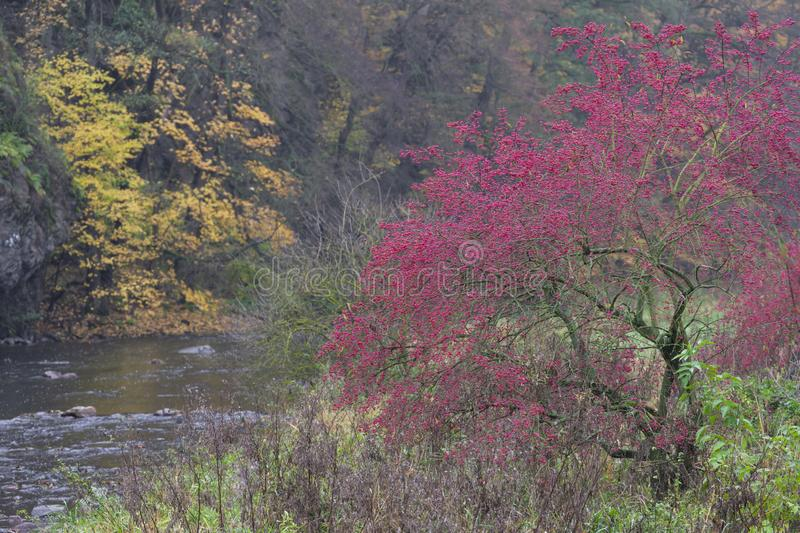 River valley Jihlava, Templstejn, Czech Republic. Absurd autumn autumnal background beautiful branch color colorful colors dream dye fall fantastic foliage royalty free stock images