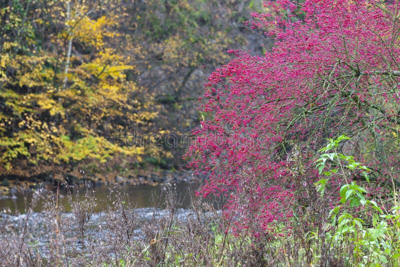 River valley Jihlava, Templstejn, Czech Republic. Absurd autumn autumnal background beautiful branch color colorful colors dream dye fall fantastic foliage stock photography