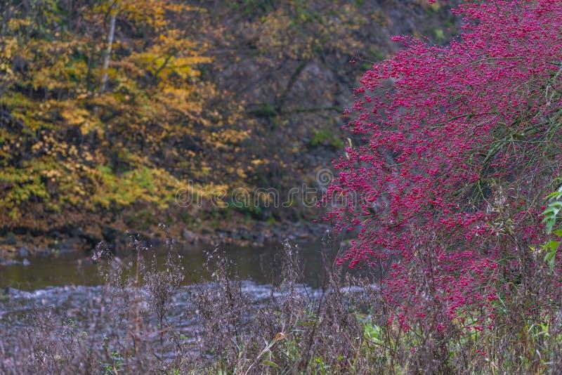 River valley Jihlava, Templstejn, Czech Republic. Absurd, autumn, autumnal, background, beautiful, branch, color, colorful, colors, dream, dye, fall, fantastic stock images