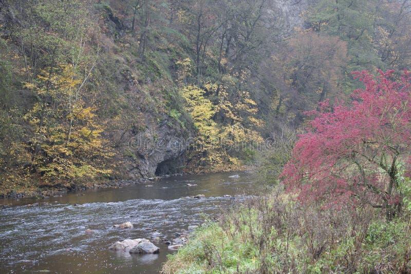 River valley Jihlava, Templstejn, Czech Republic. Absurd, autumn, autumnal, background, beautiful, branch, color, colorful, colors, dream, dye, fall, fantastic stock photography