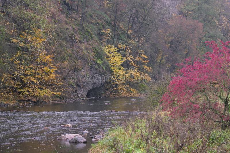 River valley Jihlava, Templstejn, Czech Republic. Absurd, autumn, autumnal, background, beautiful, branch, color, colorful, colors, dream, dye, fall, fantastic royalty free stock photos