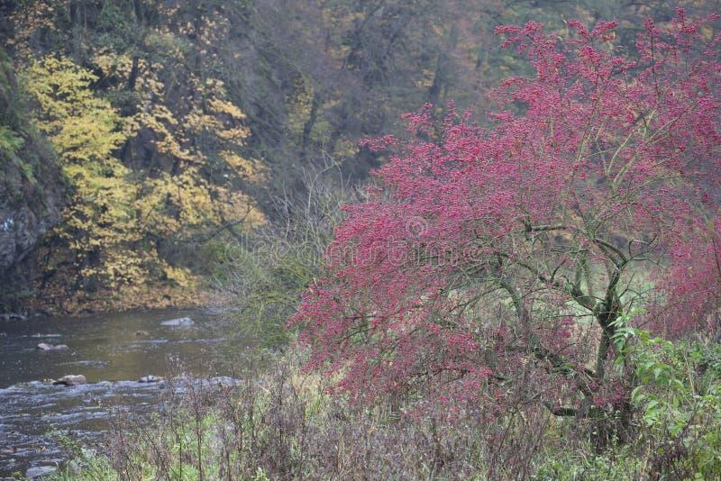 River valley Jihlava, Templstejn, Czech Republic. Absurd, autumn, autumnal, background, beautiful, branch, color, colorful, colors, dream, dye, fall, fantastic stock photo