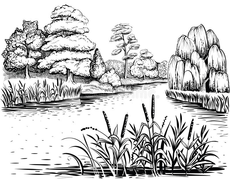 Line Drawing River : River vector landscape with trees and water plants hand