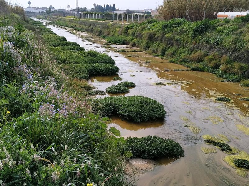 River with water and vegetation in Rociana del Condado Spain. River with water and vegetation in Rociana del Condado province of Huelva, Spain stock image