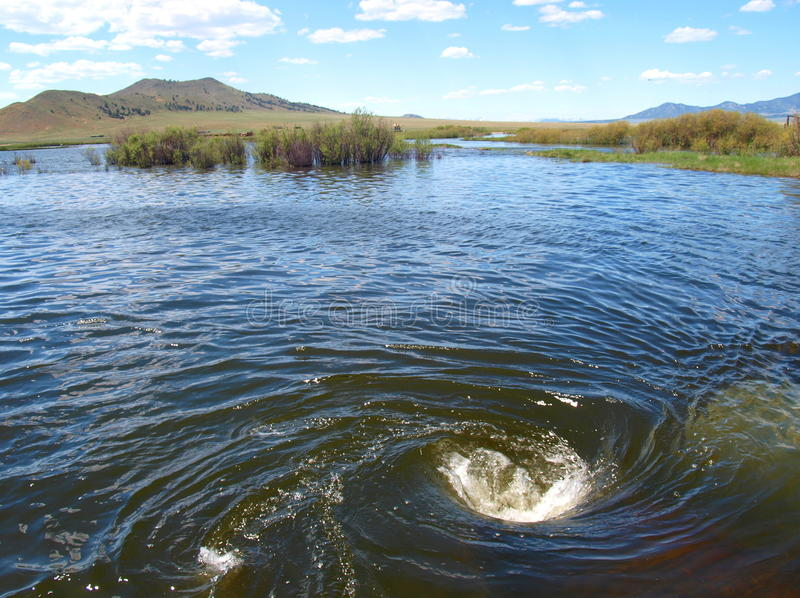 River Whirlpool. After unusually high rainfall amounts, a strong whirlpool developed in the South Platte River in Eleven Mile Canyon (Colorado). The river had royalty free stock photos