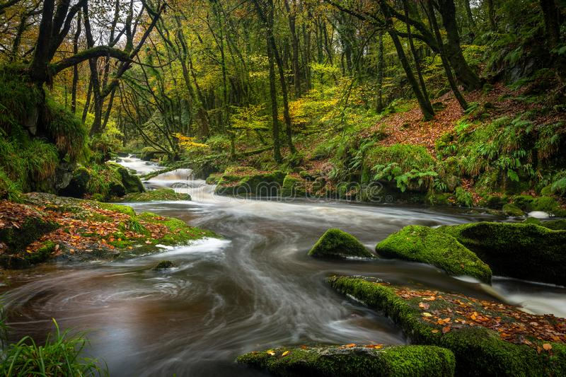 River through the Woods, Golitha Falls, Cornwall stock photo