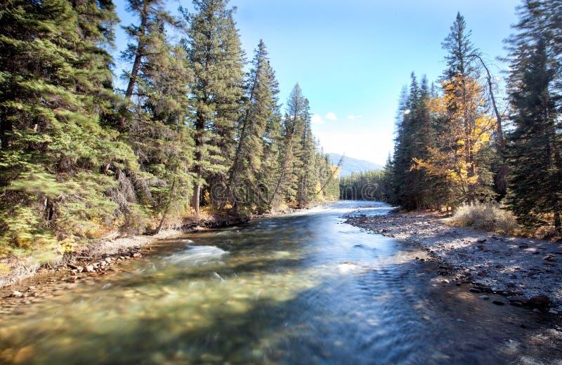 River in woods. Jasper national park,Alberta,canada stock image