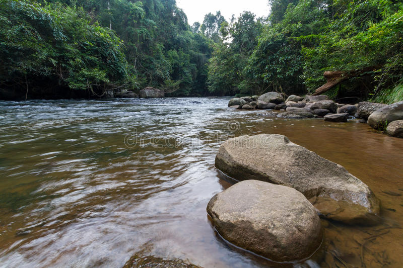 River among woods royalty free stock photography