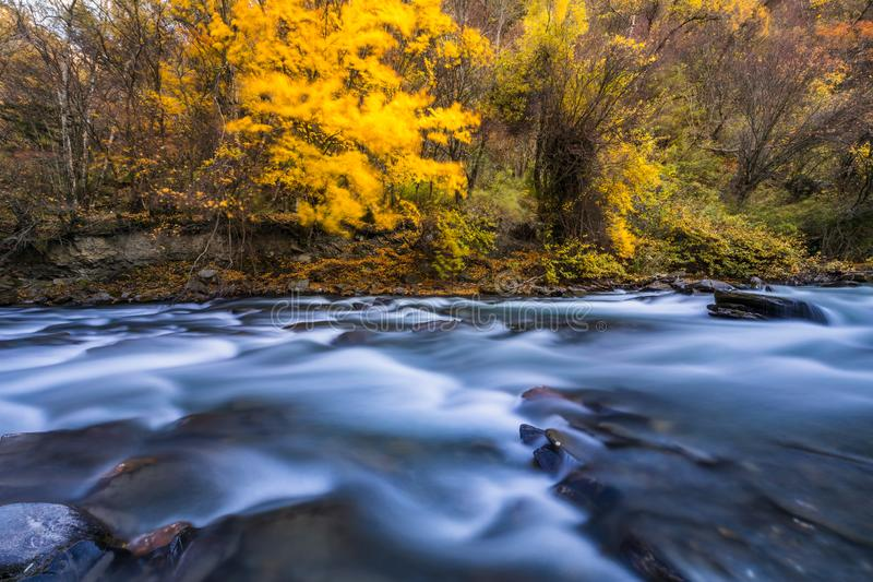 River and yellow leaf in fall royalty free stock photography
