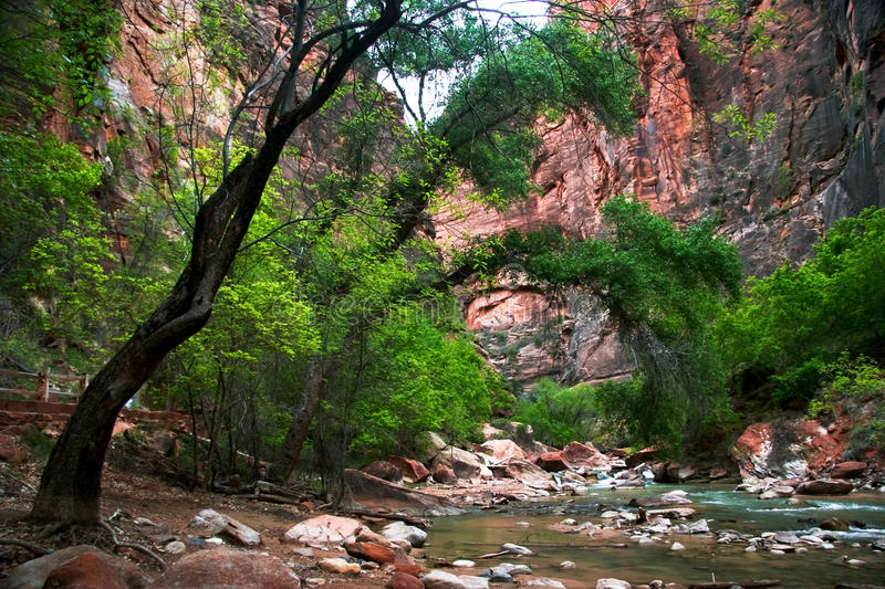 River of Zion. Small river in Zion canyon. Utah USA royalty free stock image