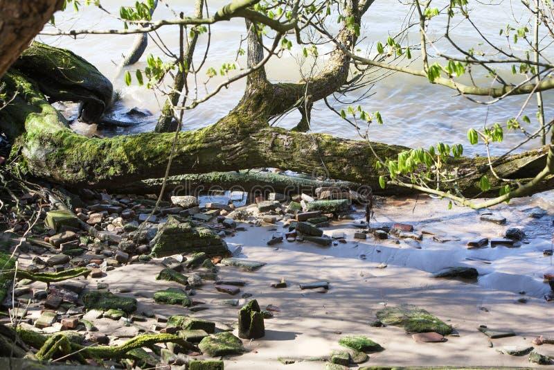 Download Riverbank zdjęcie stock. Obraz złożonej z greenbacks - 53781184