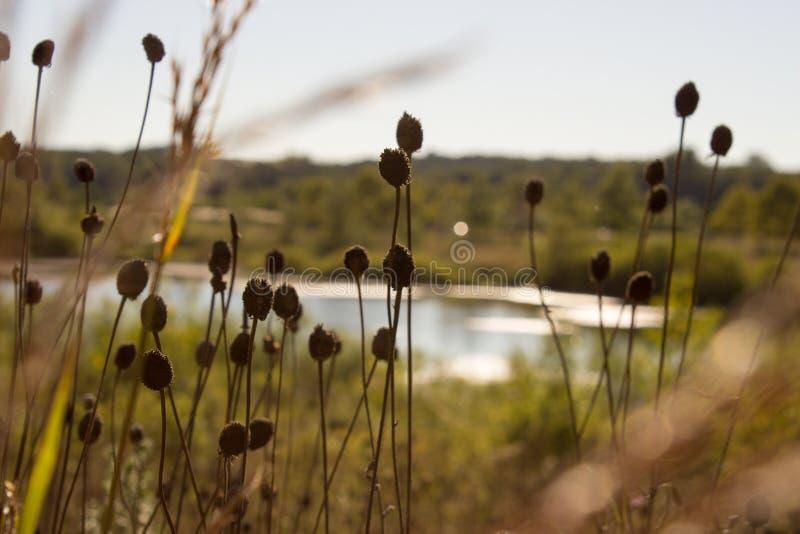 riverbank stockbilder