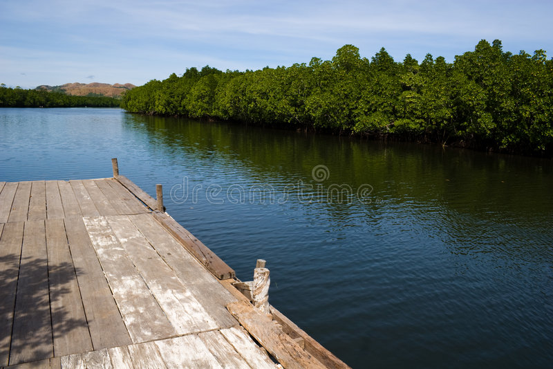 Riverbank. View of the riverbank and mangroves from a boardwalk royalty free stock photos