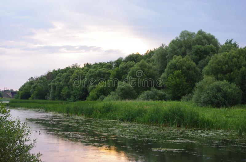 The riverbank. At dawn in the middle zone of Russia royalty free stock photo
