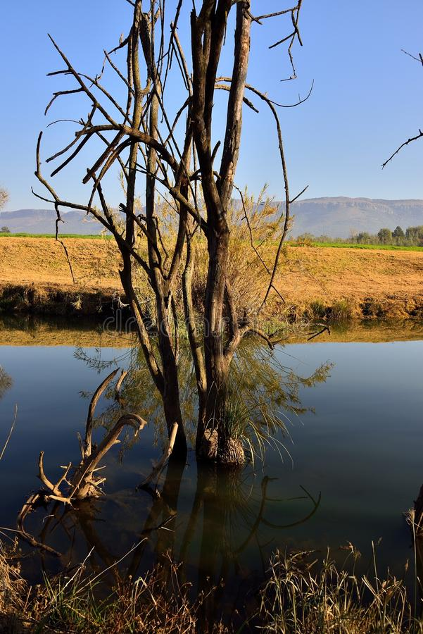Riverbank 4. Dead Tree Reflections in still water at river bank holiday farm Skeerpoort South Africa, Magaliesberg Mountains in the back drop stock photos