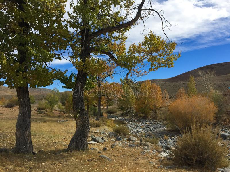 Riverbank en colores del otoño Río de la estepa altai Rusia imágenes de archivo libres de regalías