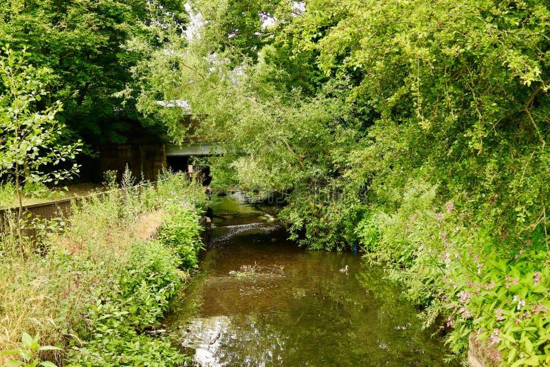 Riverbank overgrown foto de archivo